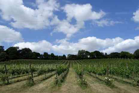 Daws Hill Vineyard - Daws Hill Vineyard Tour and Wine Tasting for Two or Four - Save 40%