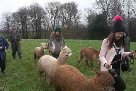 Charnwood Forest - Alpaca Walking And Fleece Craft Course with Lunch for One or Two - Save 50%