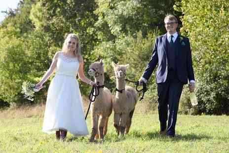 Charnwood Forest - Silver, Gold or Platinum Wedding Alpaca Package - Save 50%