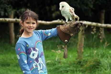 Xtreme Falconry - 90 Minute Junior Falconry Session for One, Two or Four - Save 79%