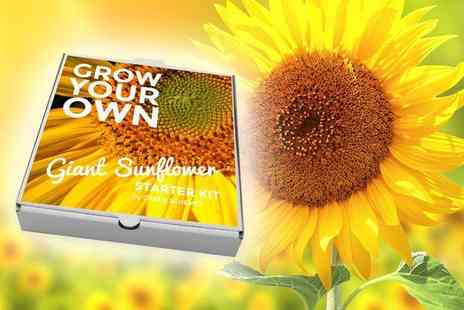 Treats on Trend - Grow Your Own kit - Save 60%