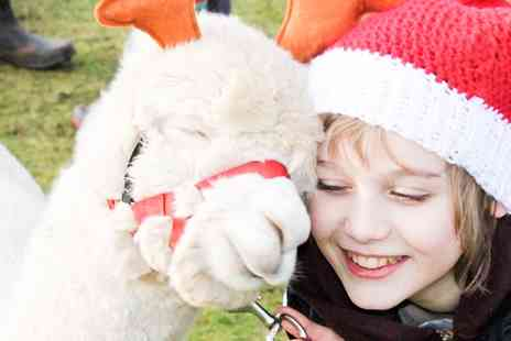 Charnwood Forest - Christmas Trail Alpaca Walk for Two or Four - Save 50%