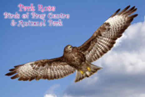 Park Rose Birds - 3 hour hands on falconry experience - Save 68%