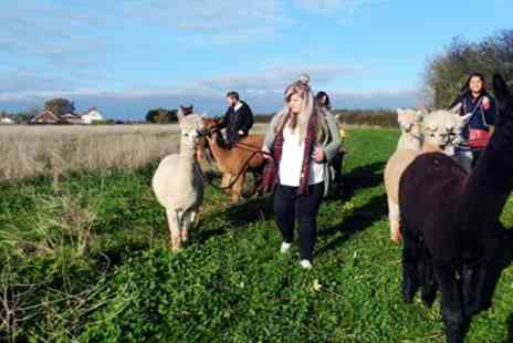 Charnwood Forest - 90 minute alpaca walking experience - Save 60%