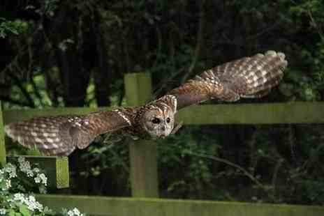 Buyagift - Woodland Walk and Owl Flying experience for two - Save 0%
