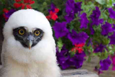 UK Owl and Raptor Displays - 90 Minute Owl Experience for One, Two or Family of Four - Save 72%