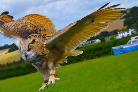 CJs - Birds of Prey or Owl Encounter Experience for One or Two - Save 80%