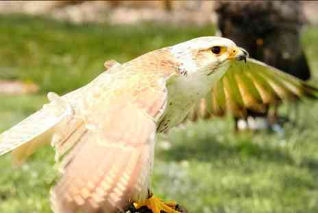 West Sussex Falconry - Half day falconry experience for one or two - Save 68%