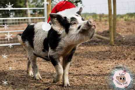 Kew Little Pigs - Miniature pig pet and play experience for one or family of four - Save 47%
