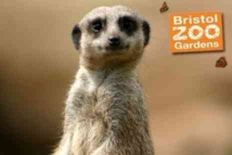 Bristol Zoo Gardens - One Adult Ticket to Sunset Special Entry on 13 July 2012 - Save 51%