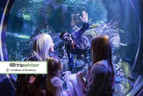 Skegness Aquarium - Swimming with sharks experience including entry to Skegness Aquarium - Save 27%