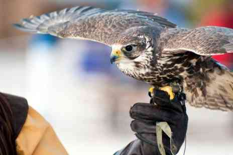 Falconry Southeast - Two Hour Hawk or Owl Walk Experience for One or Two - Save 50%