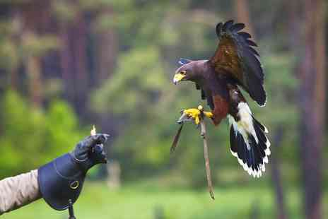 Battlefield Falconry Centre - Birds of Prey Experience for One Child or One or Two Adults - Save 58%