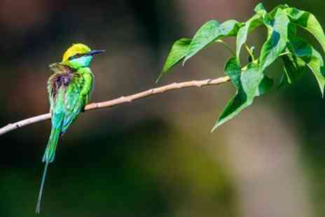 Lumle Holidays - Bird watching tour in Nepal with flights - Save 0%