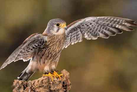 Libertys Owl Raptor and Reptile Centre - Family admission ticket to Libertys Owl, Raptor and Reptile Centre - Save 41%