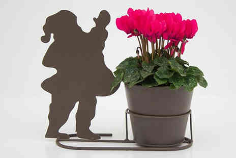 Jersey Plants Direct - Decorative Santa Silhouette Pot with Cyclamen Plant With Free Delivery - Save 24%