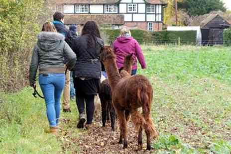 Wyld Court Alpacas - Two Hour Alpaca Experience for Two or a Family - Save 38%