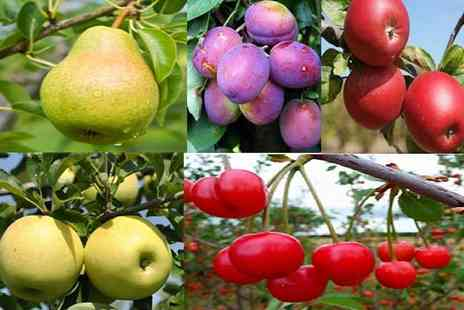 PlantStore - Orchard fruit tree collection - Save 59%