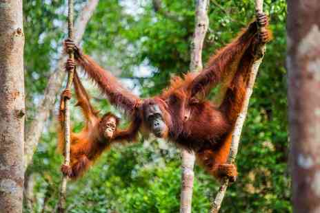 Expedition Jungle - Nine day Sumatran wild orangutan and tiger tour including accommodation, selected meals and tour guide - Save 47%