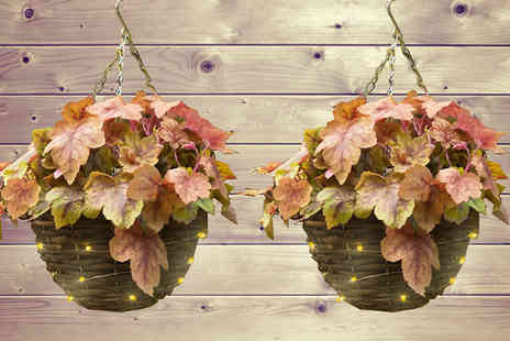 Jersey Plants Direct - 2 x Heuchera Redstone Pre Planted Rattan Hanging Baskets with Lights - Save 33%