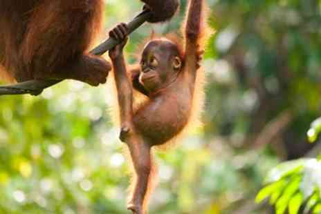 Away Holidays - Five Star Borneo escape with flights & meals - Save 0%