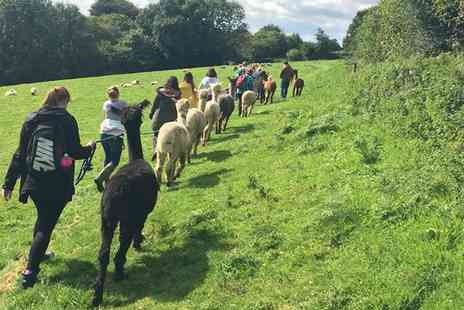 Woolley Animals - Three Hour Alpaca and Animal Experience for Two - Save 18%