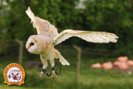 Rutland Falconry and Owl Centre - 2 hour hawk or owl experience - Save 75%