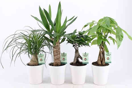 Plant Store - Scandi Houseplant Collection - Save 40%