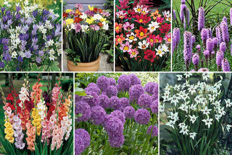 Blooming Direct - Collection of 300 summer flowering bulbs - Save 50%