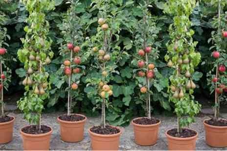 Groupon Goods Global GmbH - Four or Eight Columnar Bare Root Fruit Trees with Optional Four or Eight Planters - Save 62%