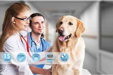 International Open Academy - Accredited veterinary support assistant course - Save 95%