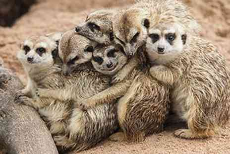 Red Letter Days - Meet the meerkats experience for 2 - Save 0%