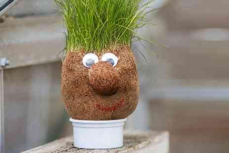 Groupon Goods Global GmbH - One or Two Tobar Mr Grasshead Toys with Growing Hair - Save 17%