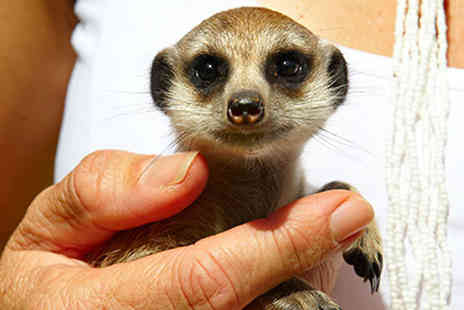 Buyagift - Meet the Meerkats experience for two at a choice of five locations - Save 0%