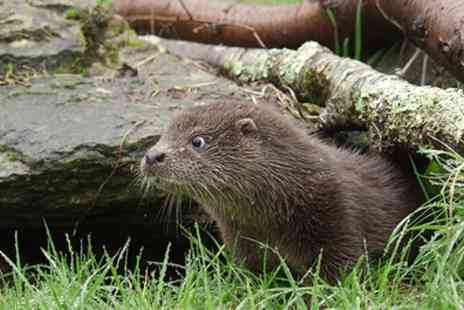Buckfast Butterflies & Otter Sanctuary - Child, Adult or Family Entry at Buckfast Butterflies & Otter Sanctuary - Save 0%