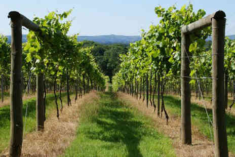 Bolney Wine Estate - 1.5 hour wine tasting tour - Save 38%
