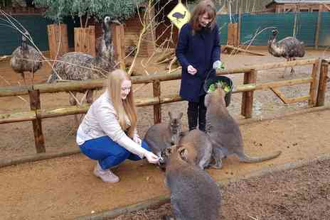 Ventura Wildlife Park - Wallaby, Red Kangaroo and Emu Behind the Scene VIP Hand Feeding Experience for Up to Four - Save 0%