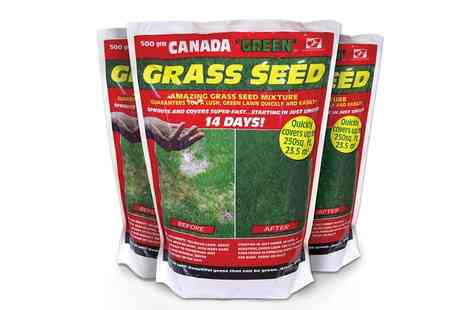 Groupon Goods Global GmbH - One, Two, Four or Six 500g Bags of Canada Green Grass Seeds - Save 36%