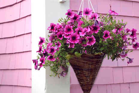 Shop4online - Pair of hanging baskets and trailing seeds including delivery - Save 60%