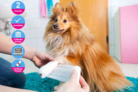 Holly and Hugo - Accredited pet first aid and animal physical therapy course bundle - Save 95%