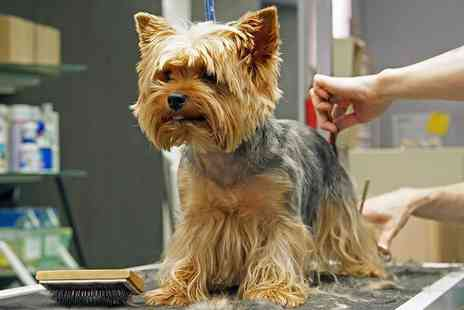 E Careers - Online dog grooming course - Save 91%