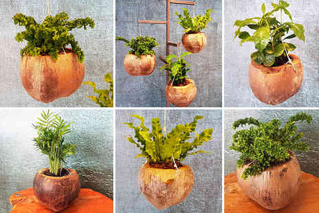 Perfect Planet Deal - Two indoor plants in coconut pots or Four plants - Save 56%