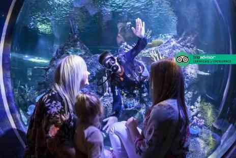 Skegness Aquarium - Swimming with sharks experience including entry to Skegness Aquarium with one spectator - Save 27%