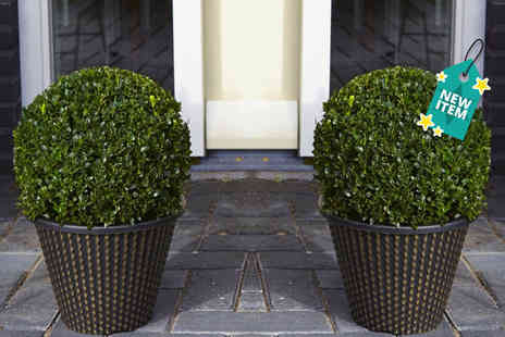 PlantStore - Pair of buxus topiary ball And gold planters - Save 60%