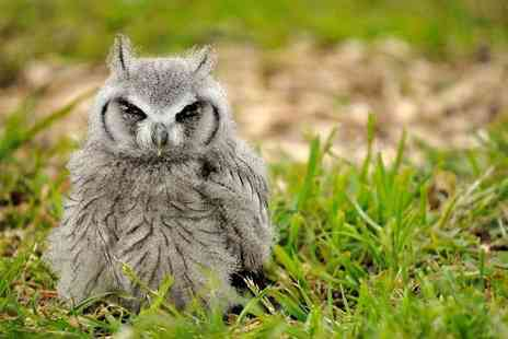 North Somerset Bird of Prey Centre - Two hour owl handling experience for one or two - Save 60%