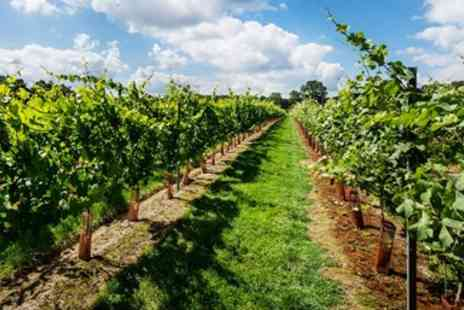 Kingscote Estate - Sussex vineyard tour, tasting & cream tea for One - Save 33%