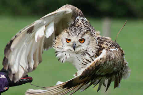 Hawk on The Wild Side - One hour bird of prey experience for one person - Save 50%