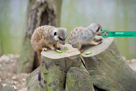 Bridlington Birds of Prey & Animal Park - Meet the meerkat experience for two - Save 23%