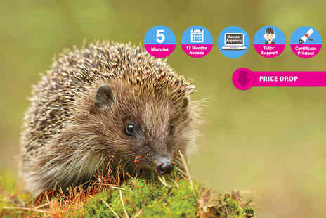 Holly and Hugo - Online wildlife rescue and rehabilitation course - Save 95%