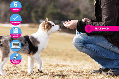 Holly and Hugo - Online ICOES accredited dog behaviour and training course - Save 92%
